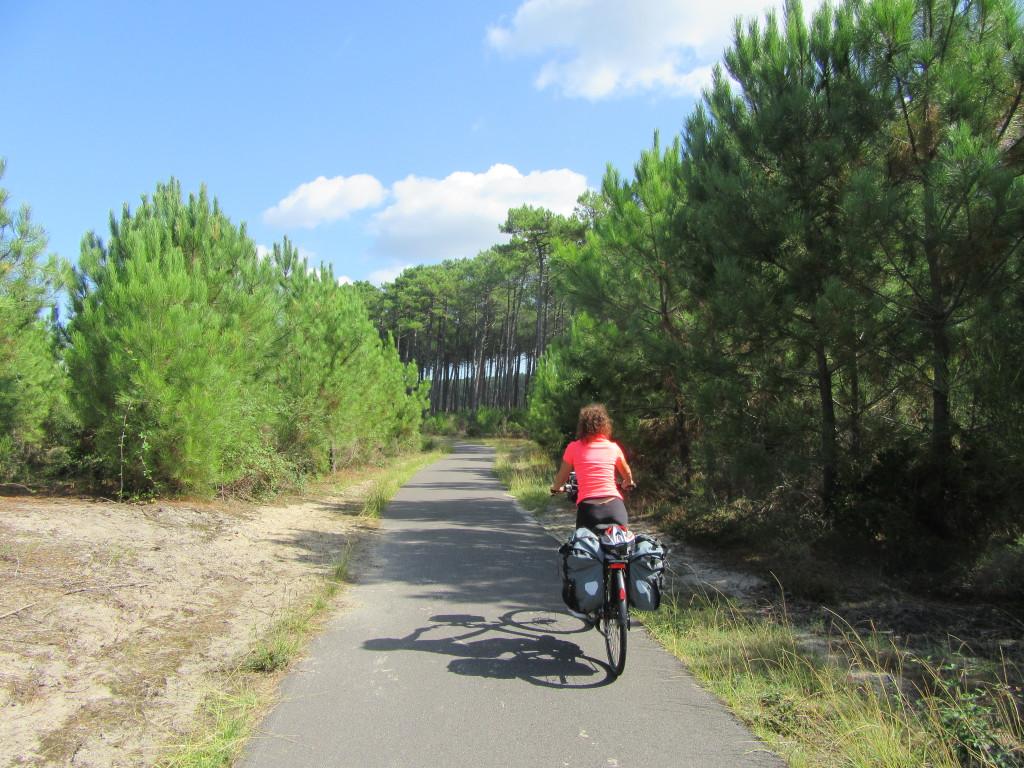 landes à vélo entre arcachon et biarritz- pins